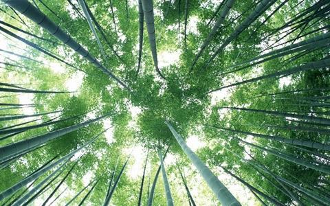Nguồn gốc và đặc điểm của cây tre Việt Nam
