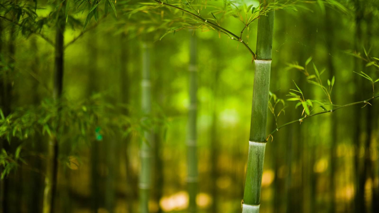 Lịch sử và ý nghĩa của cây tre trong văn hóa Việt Nam